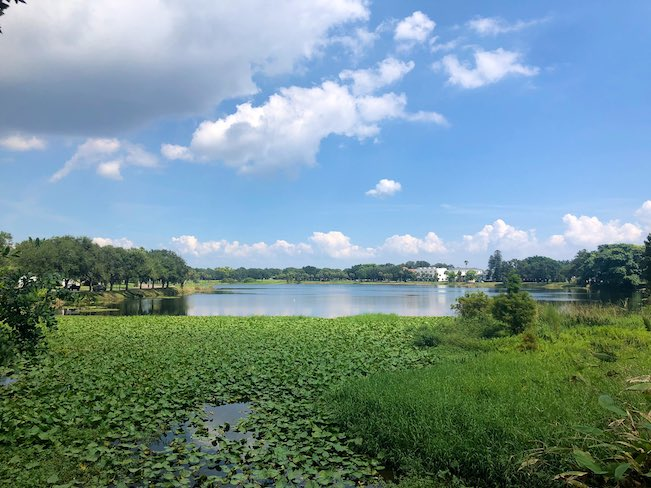 large green space with lake and banyan trees