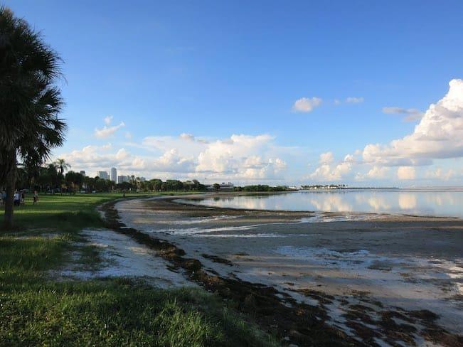 small beach coast with park scenery