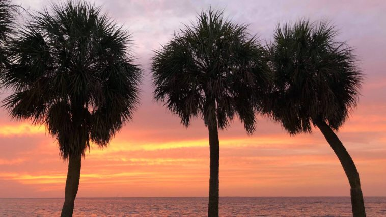 Palm trees at sunrise in Vinoy Park