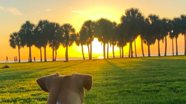 Photo of dog watching sunset behind the trees