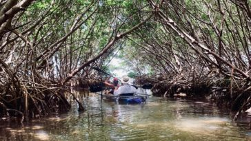 Photo of mangrove tunnel at Shell Key Preserve