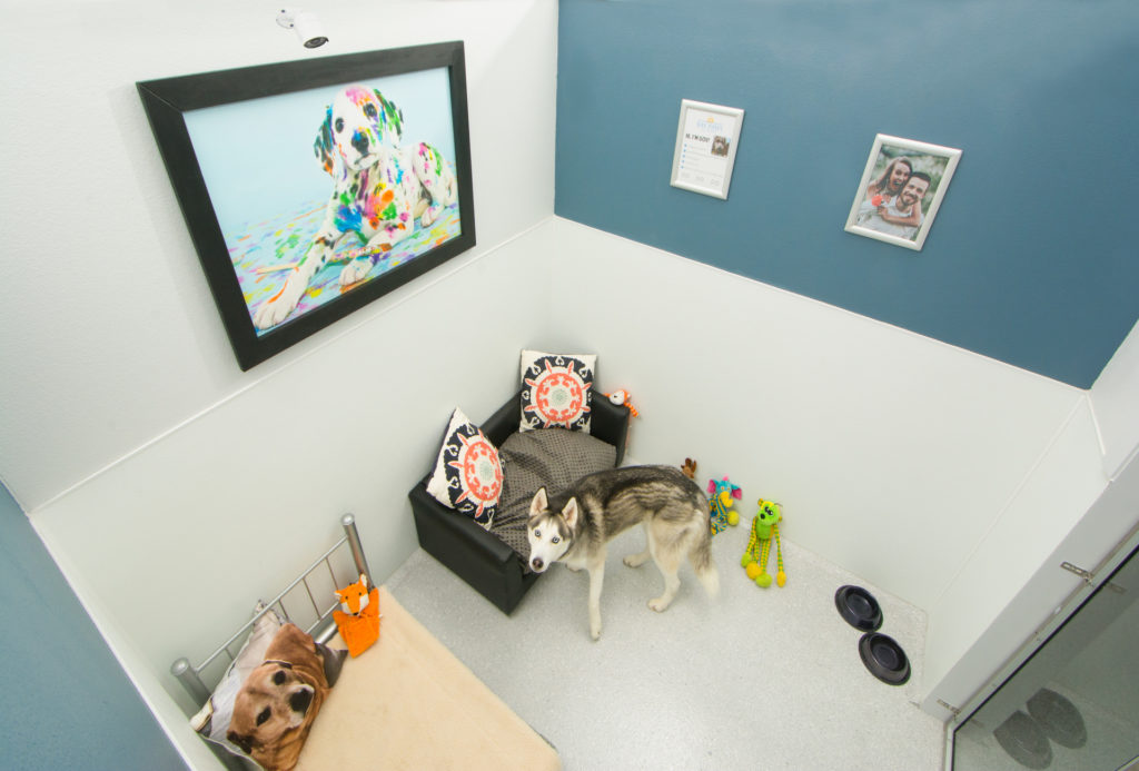 Dog sleeping on a bed inside a private room at a pet resort