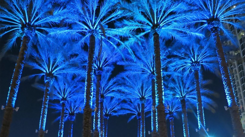 Image of palm trees lit up in blue